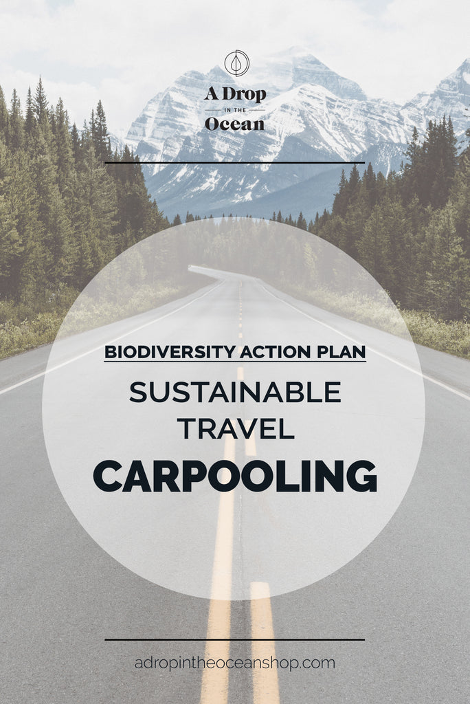 A Drop in the Ocean - Sustainable Travel Carpooling