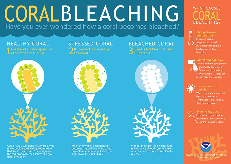 A Drop in the Ocean Sustainable Living Zero Waste Shop Coral Bleaching graphic