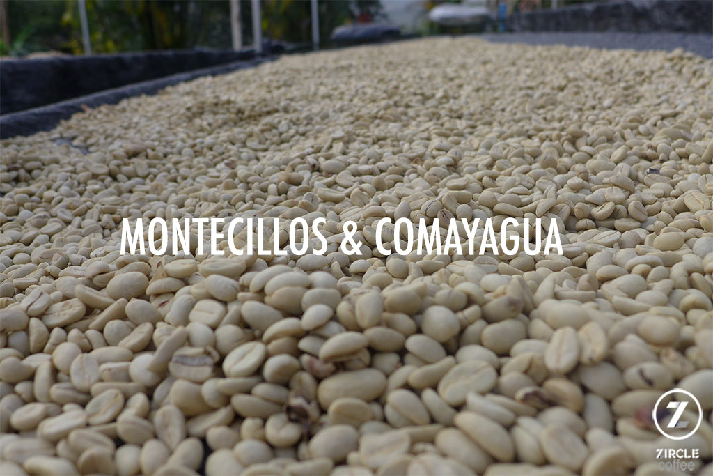 Fascinating Honduran Coffee Regions: Montecillos and Comayagua