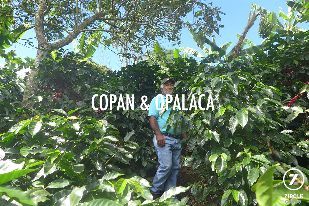 Genuine Honduran Coffee Regions: Copan and Opalaca