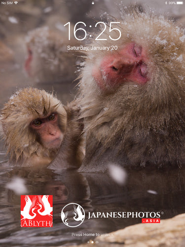 ABlyth Free Gift: Japanese Snow Monkeys