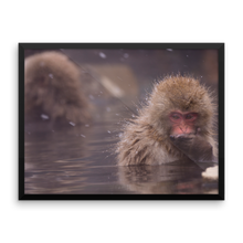 ABlyth Framed poster: Travel Series, Snow Monkey Contemplating