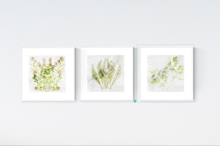 Regal Botanical Print Set x3