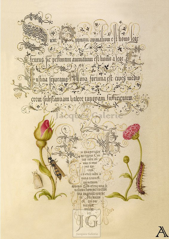 Fruit Notes, Hoefnagel, Bocskay