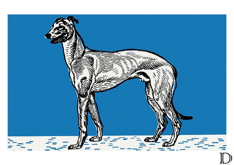 Dogs, Moriz Jung, Greyhound, Bulldog, Pitbull Terrier