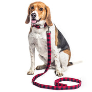 Buffalo Collar & Leash Set