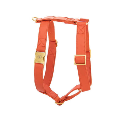 Pumpkin | Harness
