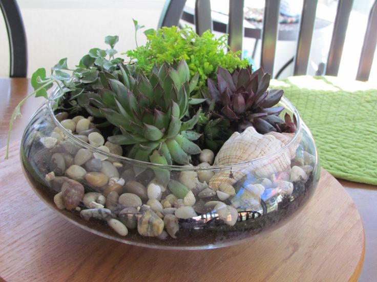 Glass Dish Garden