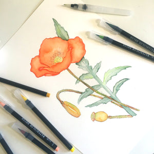 Red Poppy Watercolor Process