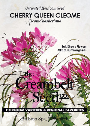 Cleome - 'Queen Cherry' Annual Untreated
