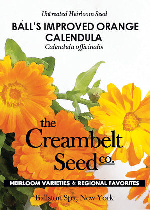 Calendula - 'Balls Improved Orange' Annual Untreated