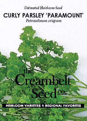 Parsley - Paramount Curly Parsley Untreated