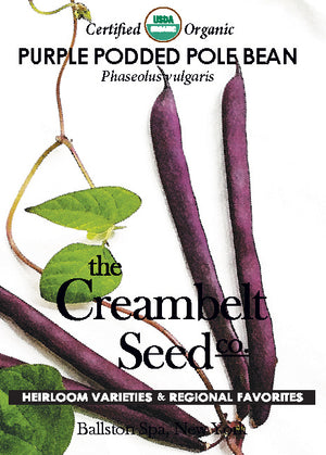 Bean - Purple Podded Pole Bean Certified Organic