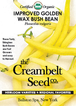 Bean - Golden Wax Bush Bean Certified Organic