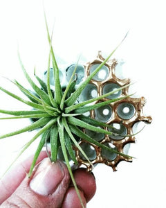 Dovekie & Finch - White - Honeycomb Air Plant Magnet