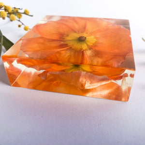 Orange Poppy - Flower Square