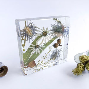 Daisy & Sea Holly - Flower Square