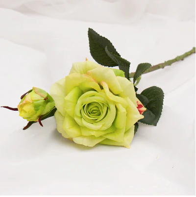 long stem rose with bud