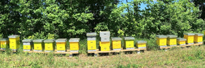 Bee Hives owned by innisfil creek honey In Oro-Medonte