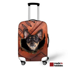 house_valise_chihuahua