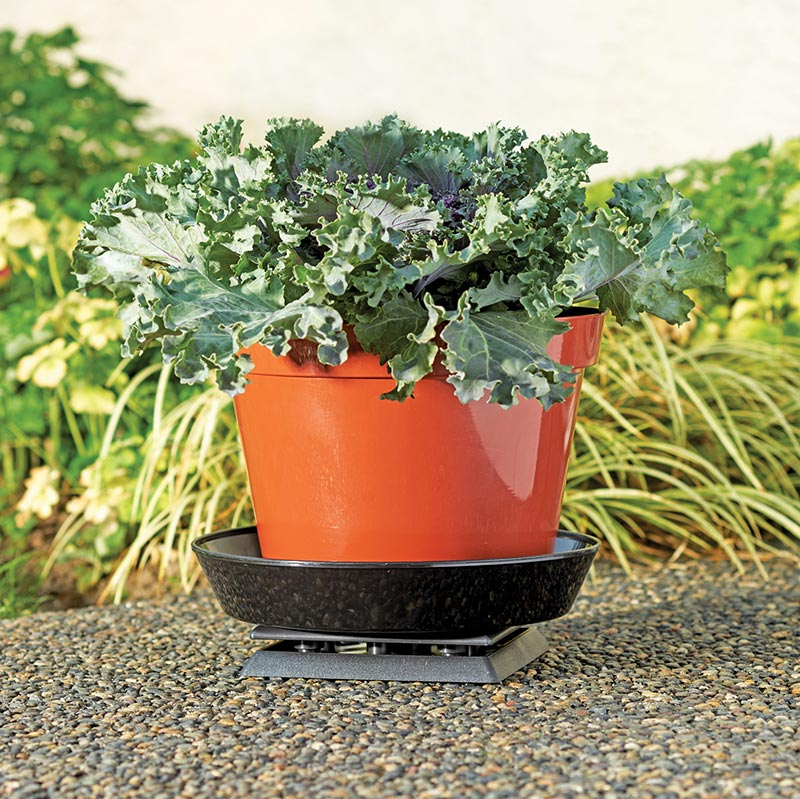 Potted Plant Bug Protection