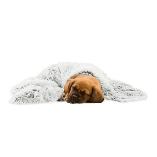 Calming Dog Blanket by PresentPet