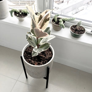 Apartment Plant Stand