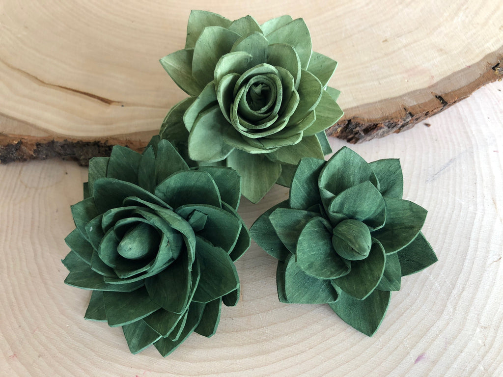 Green Delicate Wood Succulents Assortment Loose Flowers & Samples Pine and Petal Weddings