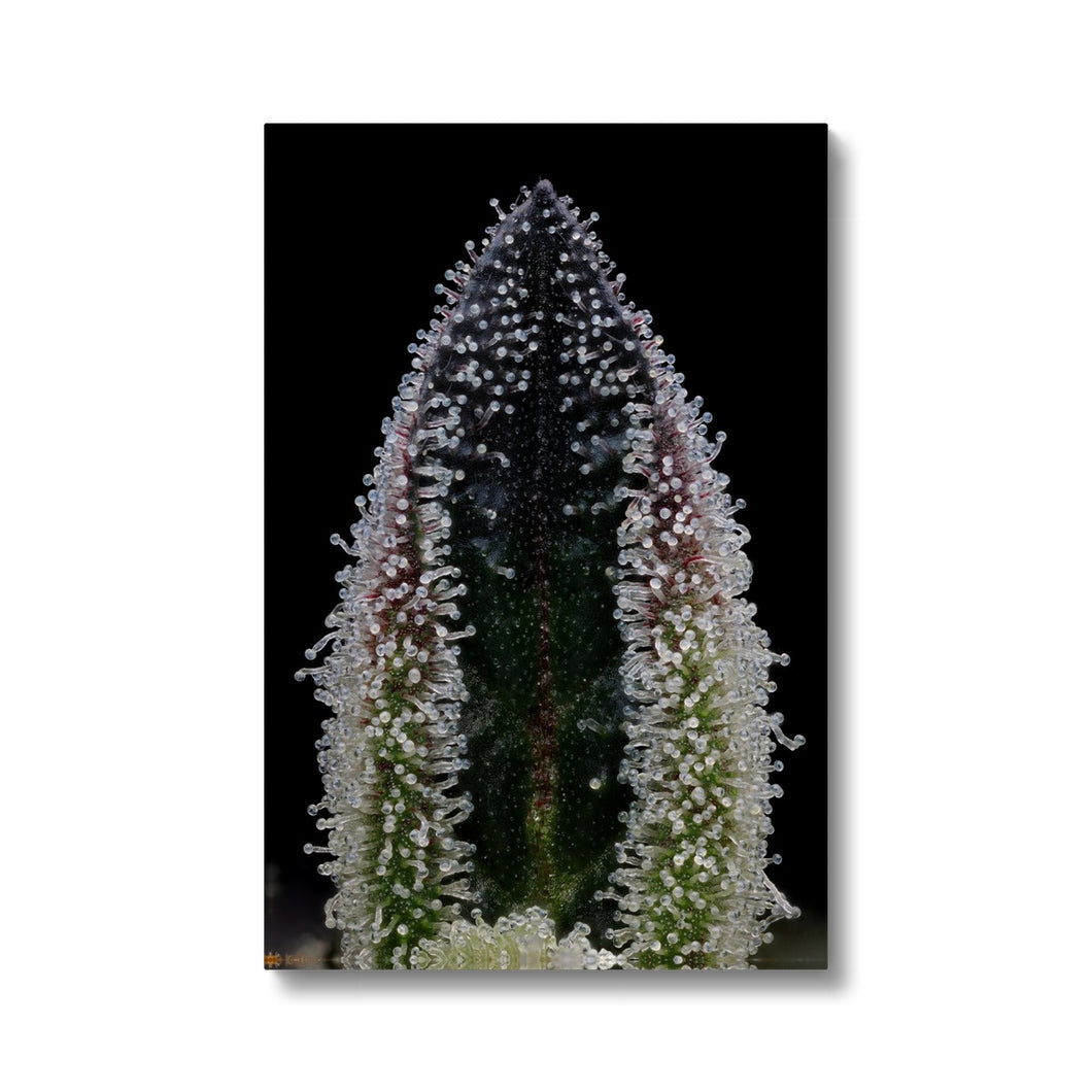 GMO Canvas Print - Grown by Harvest Moon Gardens