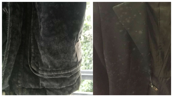 Mildew in clothes due to high humidity