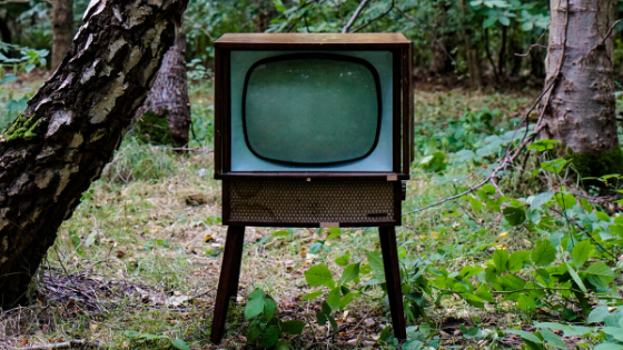 tv in forest