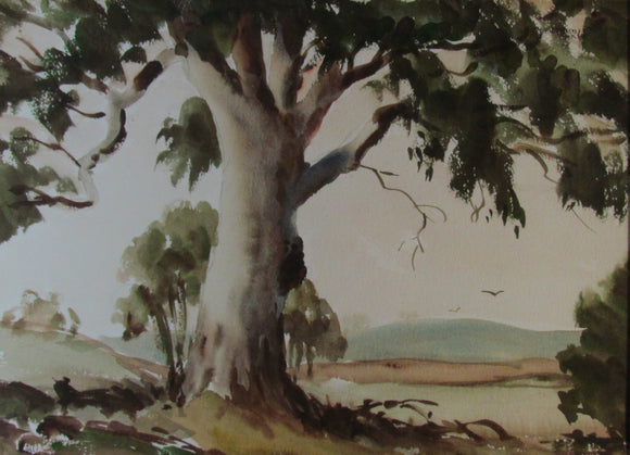 Unsigned Watercolour Australian Landscape The Big Gum
