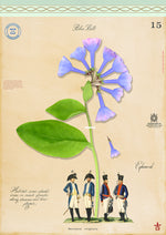 Bluebell Giclee Print by MF Cardamone