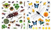 Eyelike Stickers: Bugs 400 Reusable Bug Stickers