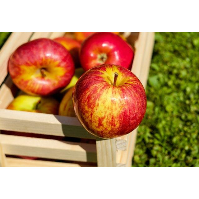 Certified Organic RED Apples 1kg