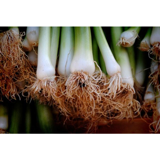 Certified Organic Spring Onion bunch