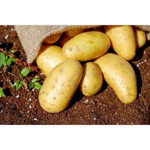 Organic Dutch Potatoes per kg