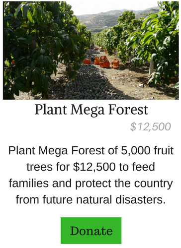 Plant Mega Forest of Fruit Trees