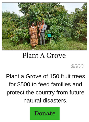 Plant A Grove of Fruit Trees