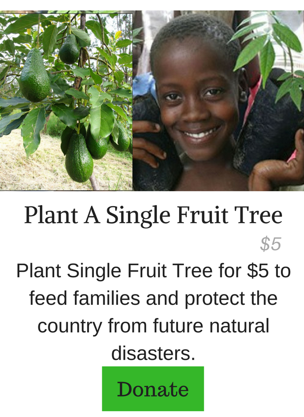 Plant A Single Fruit Tree