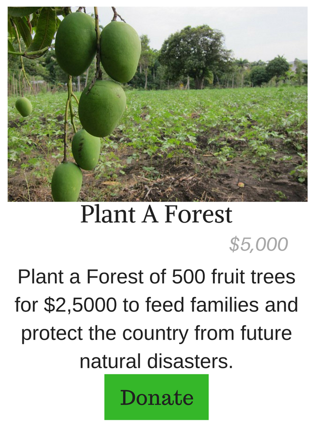 Plant A Forest of Fruit Trees