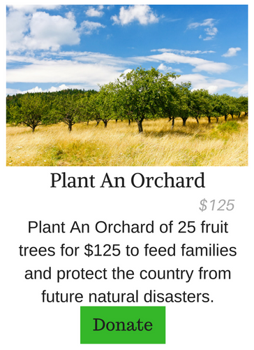 Plant An Orchard of Fruit Trees