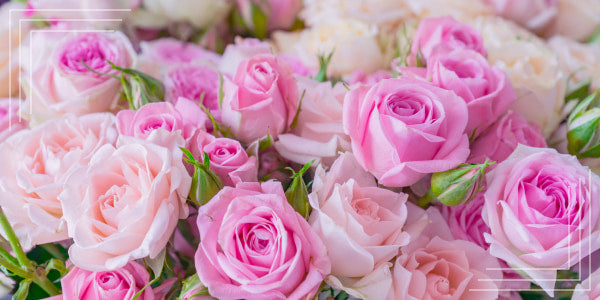 Is it worth choosing roses from Ecuador?
