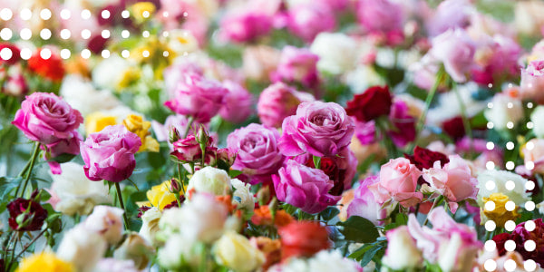 Typical features of traditional roses