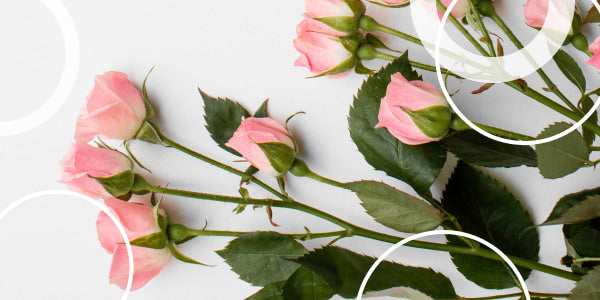 Typical features of spray roses