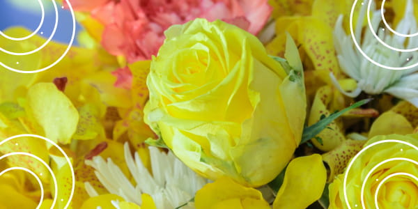 What flowers combined with yellow roses?