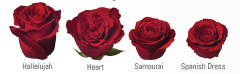 how to Choose a Color and Size of flowers