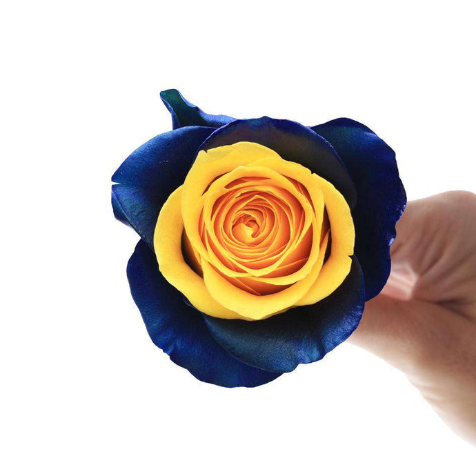Blue Coast Rose Bouquet - Rosaholics