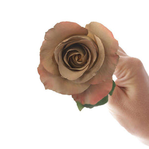 Chenoa Rose Bouquet - Rosaholics