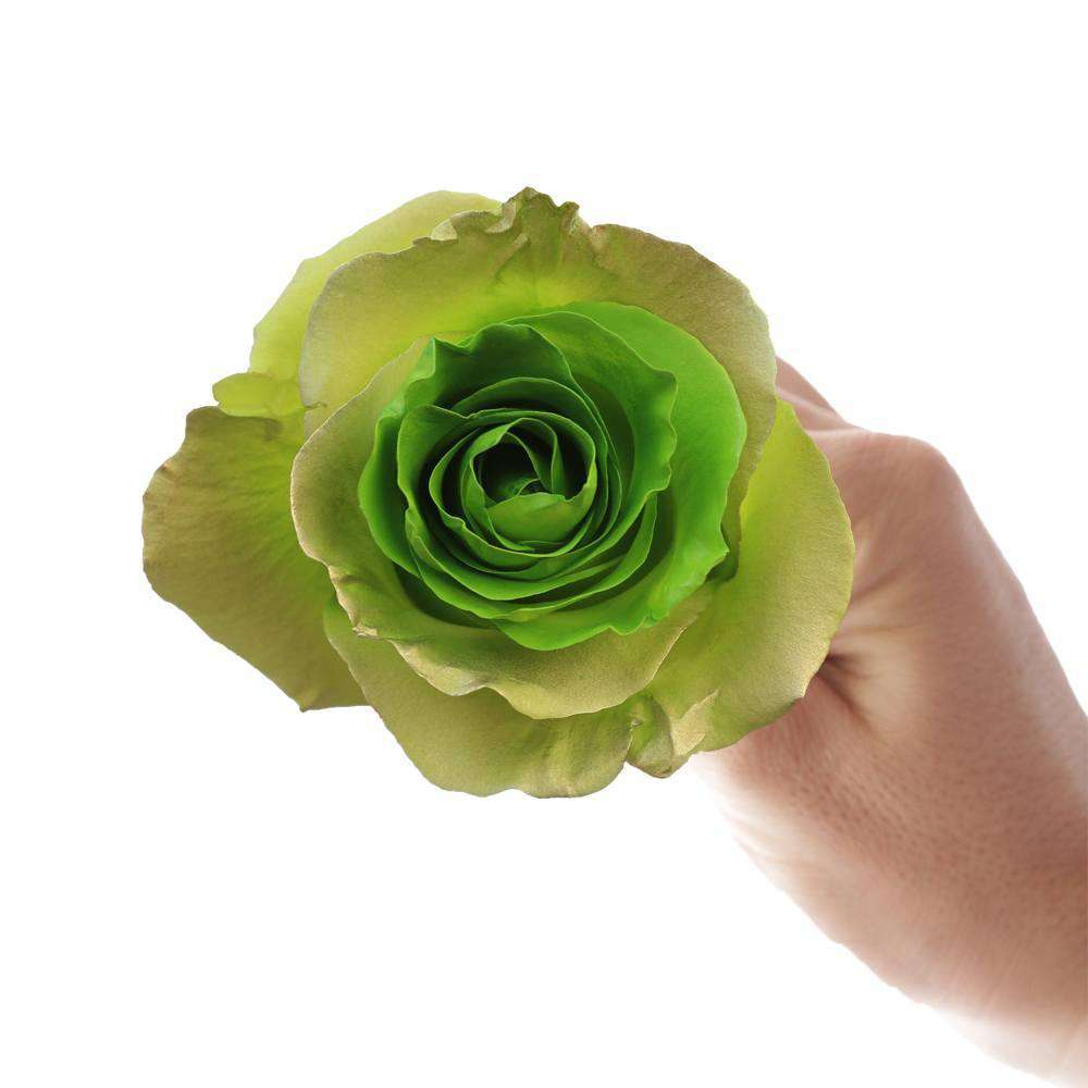 GREEN roses for delivery - Rosaholics
